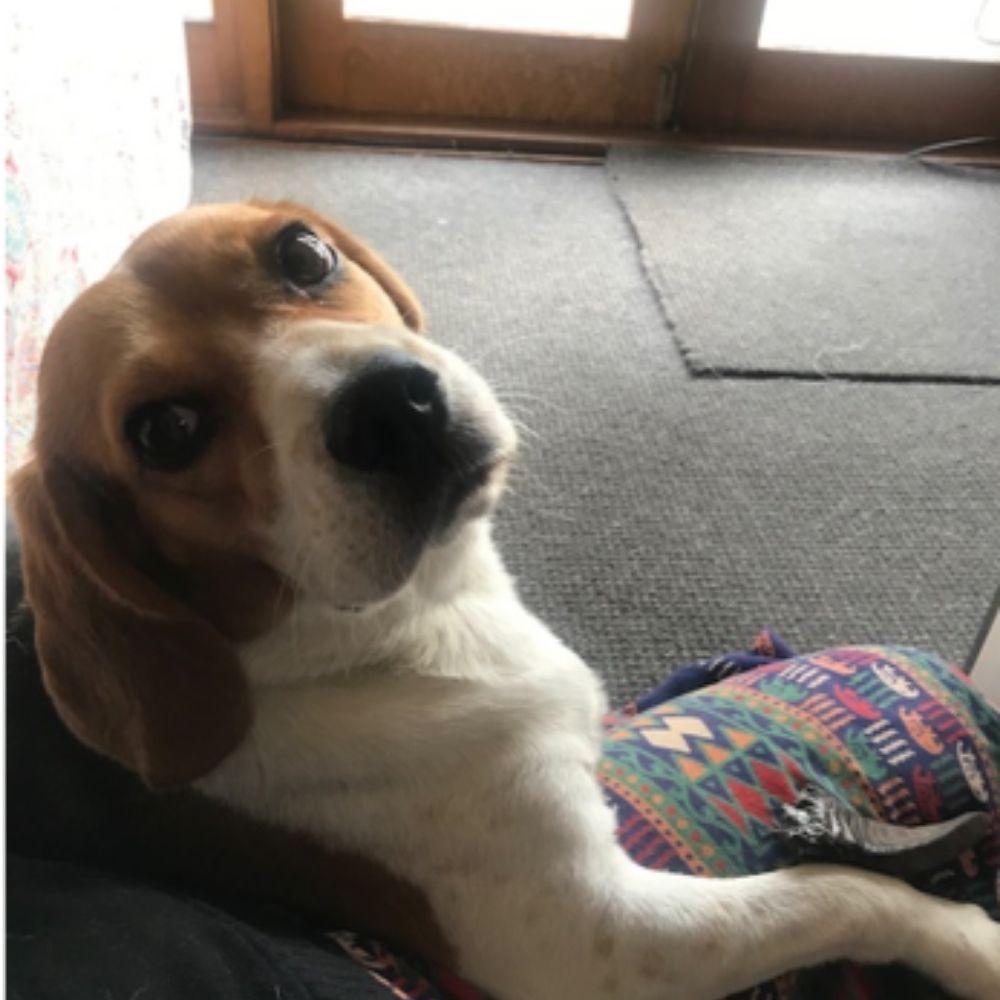 Max adopted through BRN